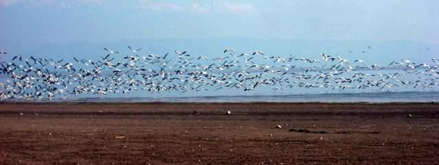 A regular site at the protected wetland: Photo Sanjeeva Pandey