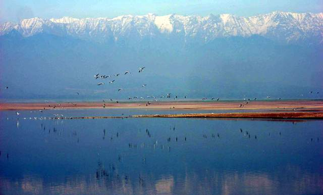 Dhauladhar Ranges a backdrop of the Pong wetland; Photo Sanjeeva Pandey