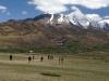 Cricket at Pin Monastery