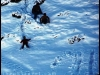 kufri-snowfall-january-in-shimla
