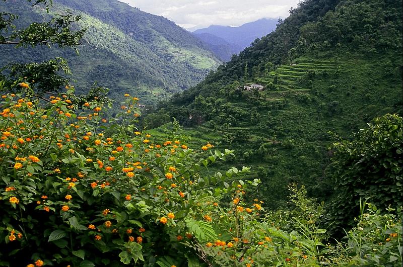 Kiarighat in Himachal Pradesh
